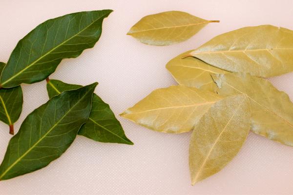Lá bay leaves tươi và khô